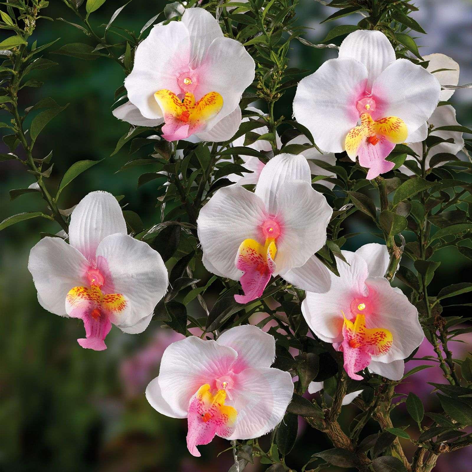 12-osainen sievä aurinko-LED-valoketju Orchidee.-4523340-01