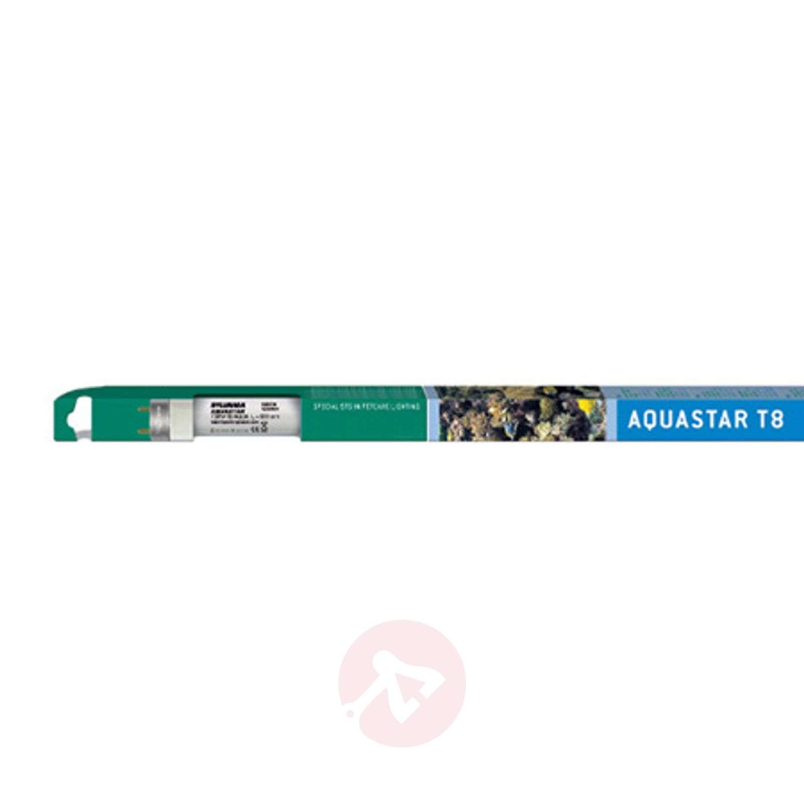 G13 T8 25 W Aquastar-päivänvalolamppu-8530168-03