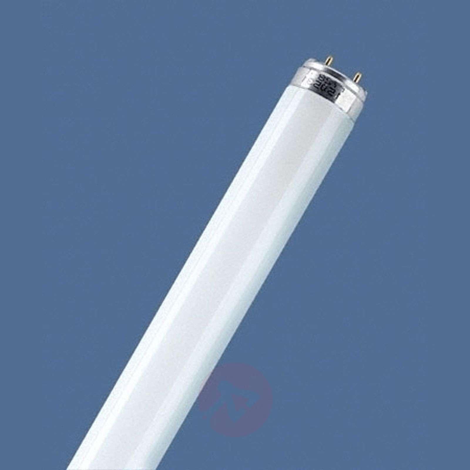 G13 T8 880 LUMILUX SKYWHITE-7260545X-01