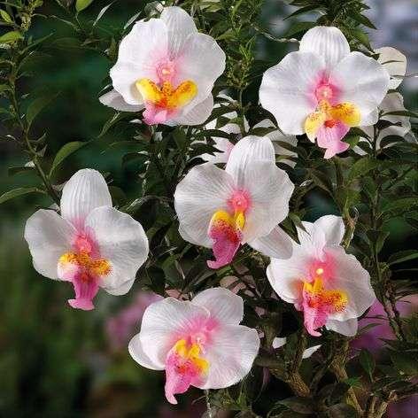 12-osainen sievä aurinko-LED-valoketju Orchidee.
