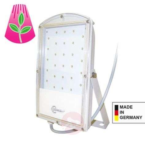 LED-kasvilamppu Astir