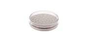 GX53-LED-lamput